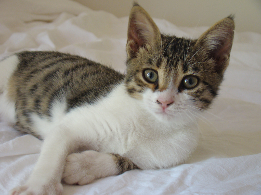 Interesting Facts About Cyprus Cats